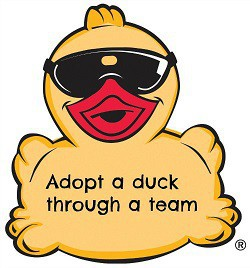 Click here to adopt a duck from a team