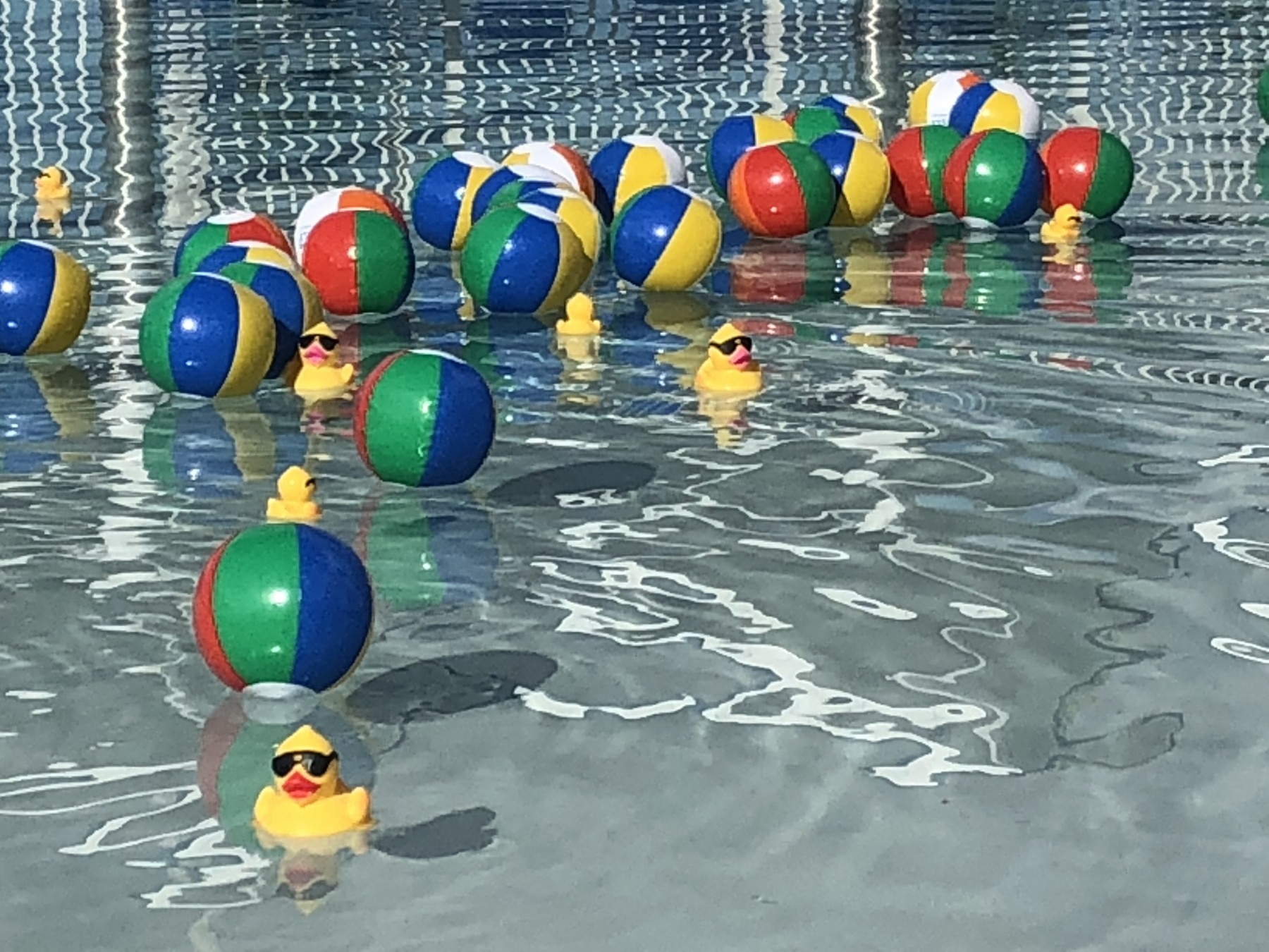 Adopt a Duck for Water Safety